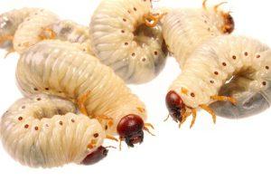 También gusanos. Parásitos y pelos, según el Food and Drug Administration Department. Foto:vía Getty Images. Imagen Por:
