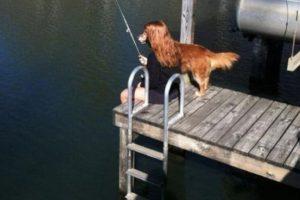 El perro no está pescando. Foto:Reddit. Imagen Por: