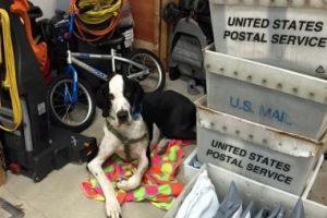 Actualmente George mide lo mismo que Bella, pero pesa tres veces más que ella, según informes del Proyecto de Servicios de Perros en Massachusetts. Foto:Vía Facebook/Bella and George. Imagen Por: