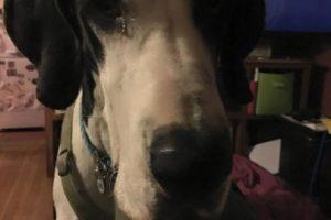 La ayuda de George le brindó a Bella resultados igual o mejores que si hubiera tomado otro tipo de terapias, se compartió en su cuenta de Facebook. Foto:Vía Facebook/Bella and George. Imagen Por: