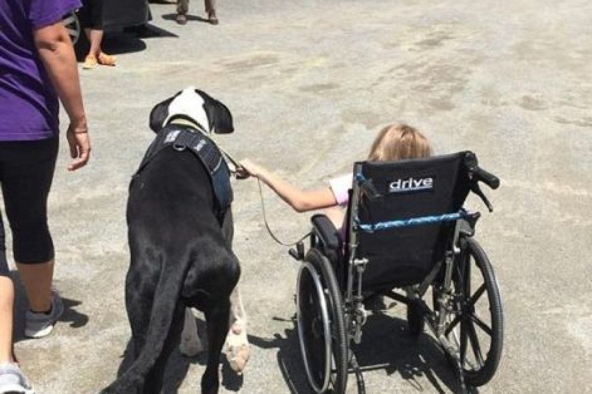 Foto:Vía Facebook/Bella and George. Imagen Por: