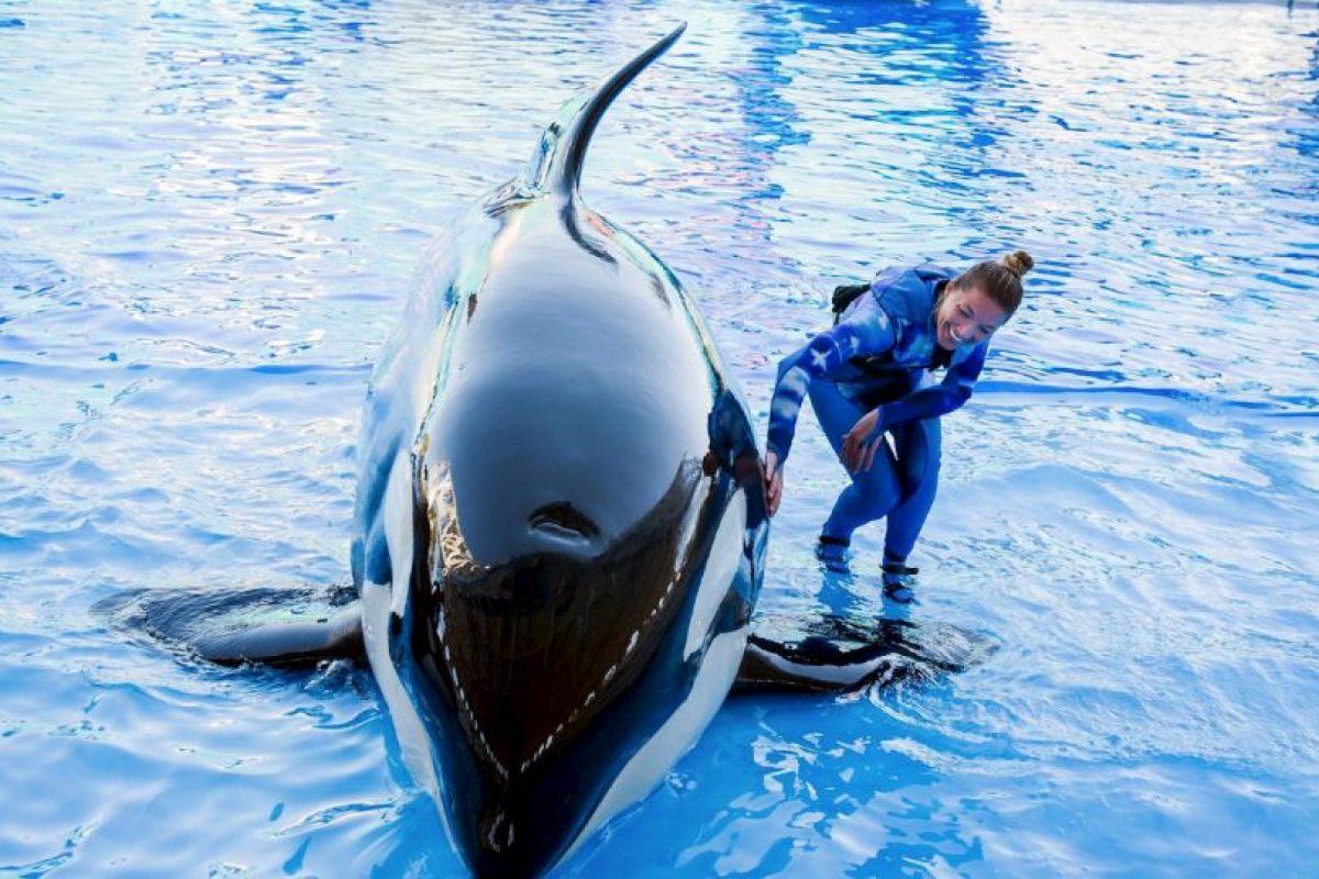 Según expertos esto ha sucedido por el estrés que viven estos animales en cautiverio. Foto:Vía Facebook SeaWorld. Imagen Por: