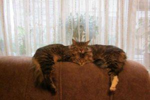 Este gato no es un fenómeno: realmente son dos gatos. Foto:Reddit. Imagen Por: