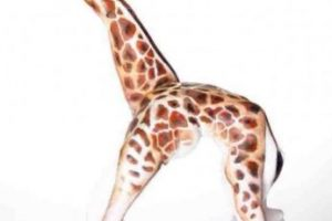Una bailarina Foto:Tumblr. Imagen Por: