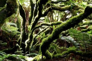 "Bosques que parecen ""encantados"" Foto:Pixabay. Imagen Por:"