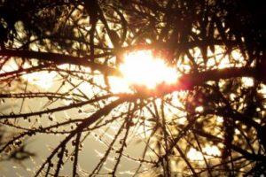 "A continuación: Bosques que parecen ""encantados"" Foto:Pixabay. Imagen Por:"