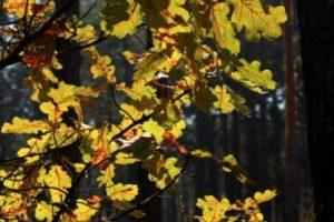 "Bosques que parecen ""encantados"" Foto:Pinterest. Imagen Por:"