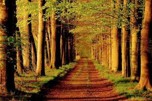 "Bosques que parecen ""encantados"" Foto:Tumblr. Imagen Por:"