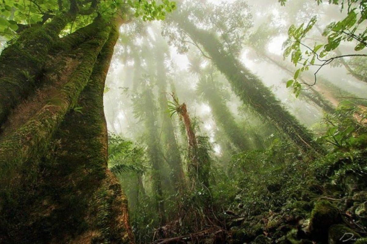 """Bosques que parecen """"encantados"""" Foto:Flickr. Imagen Por:"""