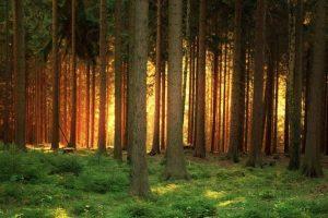 "Bosques que parecen ""encantados"" Foto:Wikimedia. Imagen Por:"