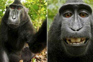 El famoso selfie del mono Foto:Instagram. Imagen Por: