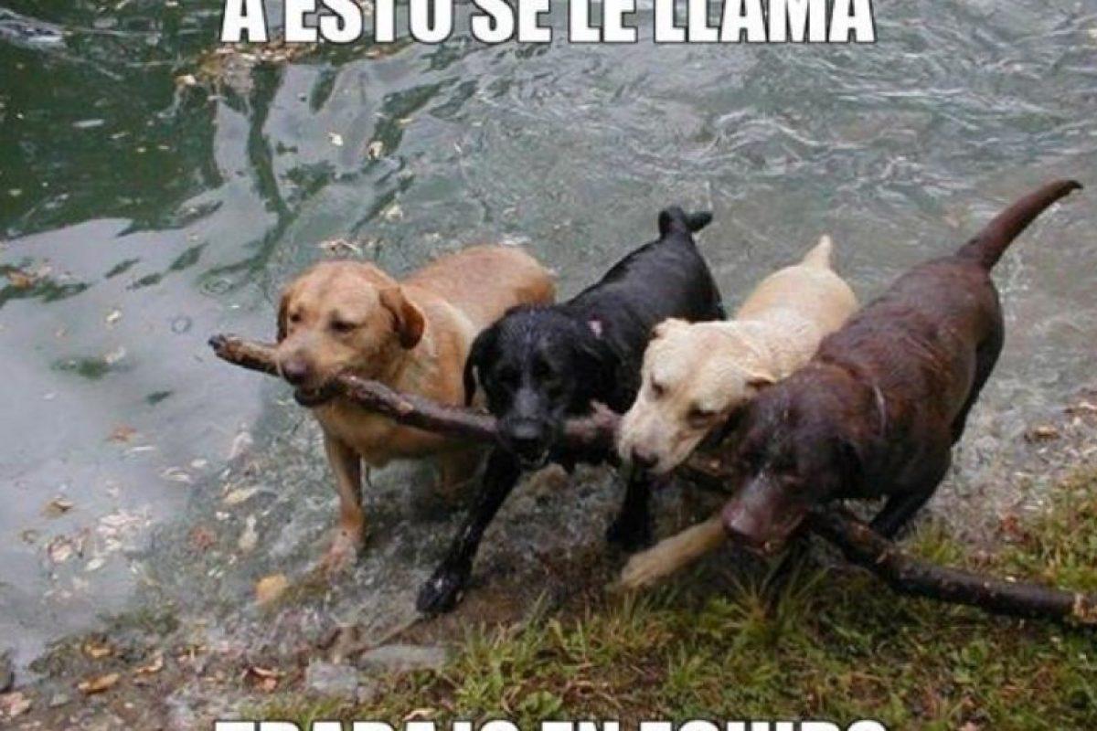 cachorritos en situaciones graciosas Foto:Tumblr. Imagen Por: