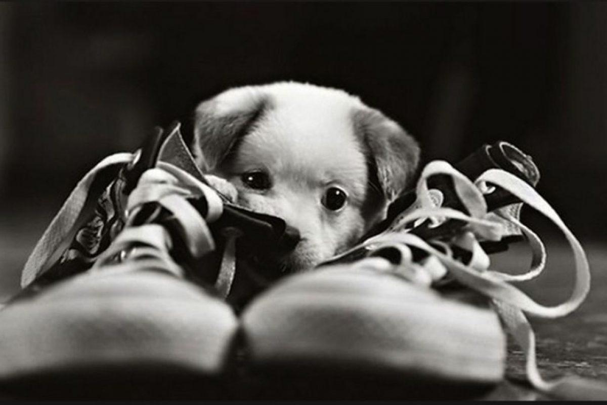 cachorritos en situaciones graciosas Foto:Imgur. Imagen Por: