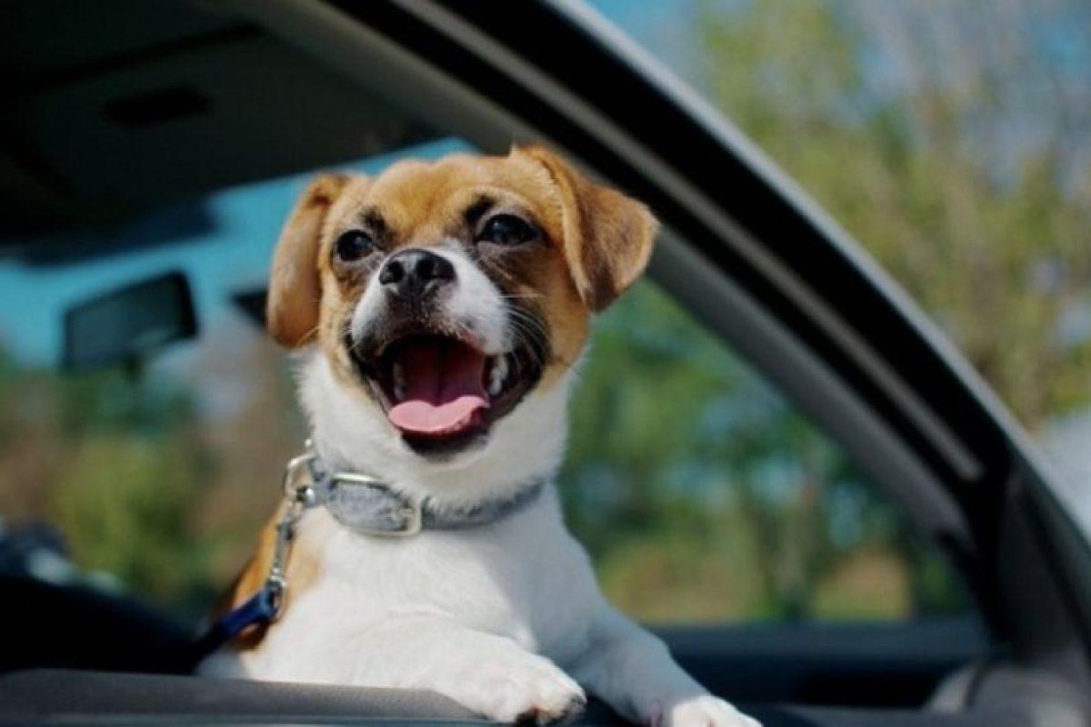 cachorritos en situaciones graciosas Foto:Pinterest. Imagen Por: