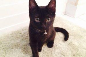 Ver a un gato negro Foto:instagram.com/asweeneyphoto. Imagen Por: