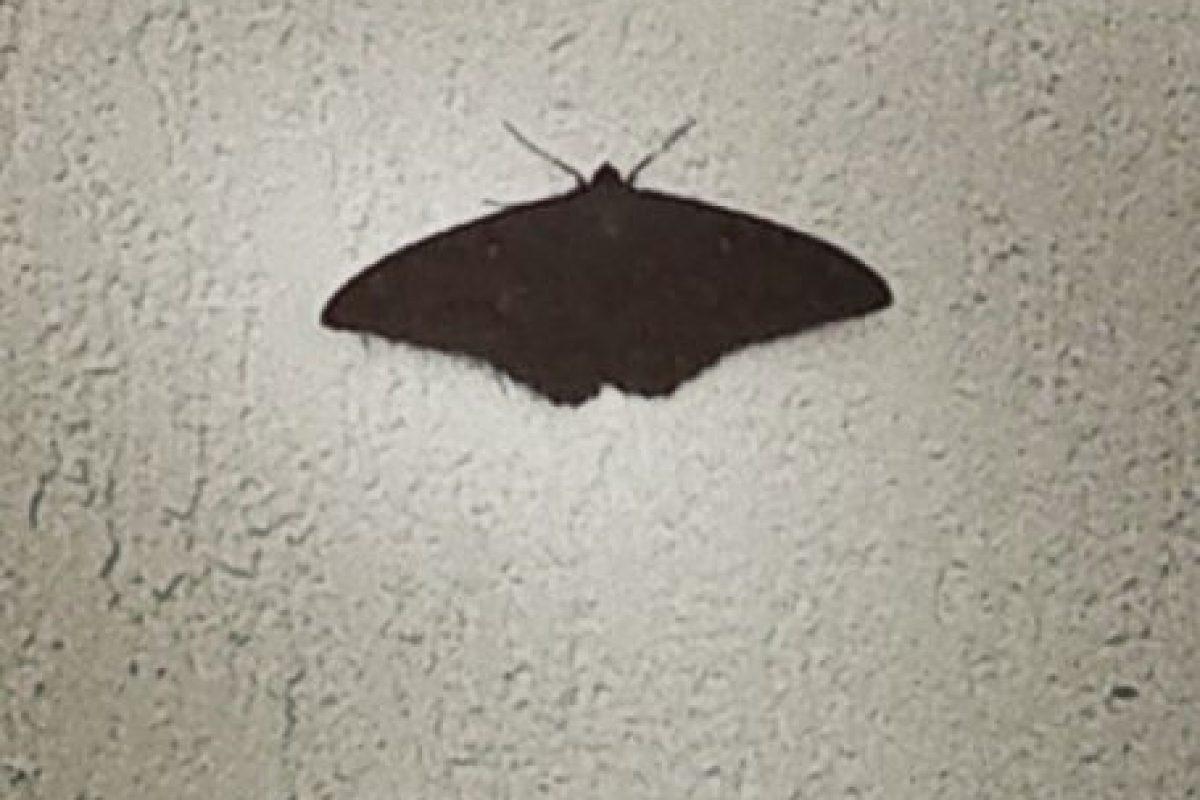Que una mariposa negra entre en su hogar Foto:instagram.com/wilson.cardenass. Imagen Por: