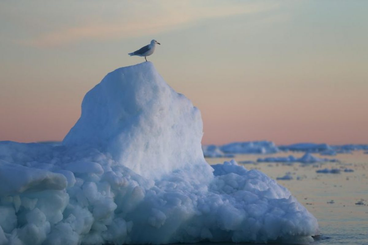 La NASA también analiza al glaciar Nioghalvfjerdsfjorden. Foto:Getty Images. Imagen Por: