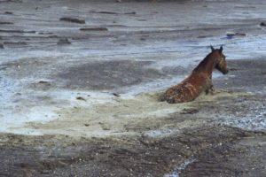 En el Tolima solo se ven estructuras de concreto y pasto que cubre a las miles de víctimas y animales que mató la avalancha. Foto:vía Getty Images. Imagen Por:
