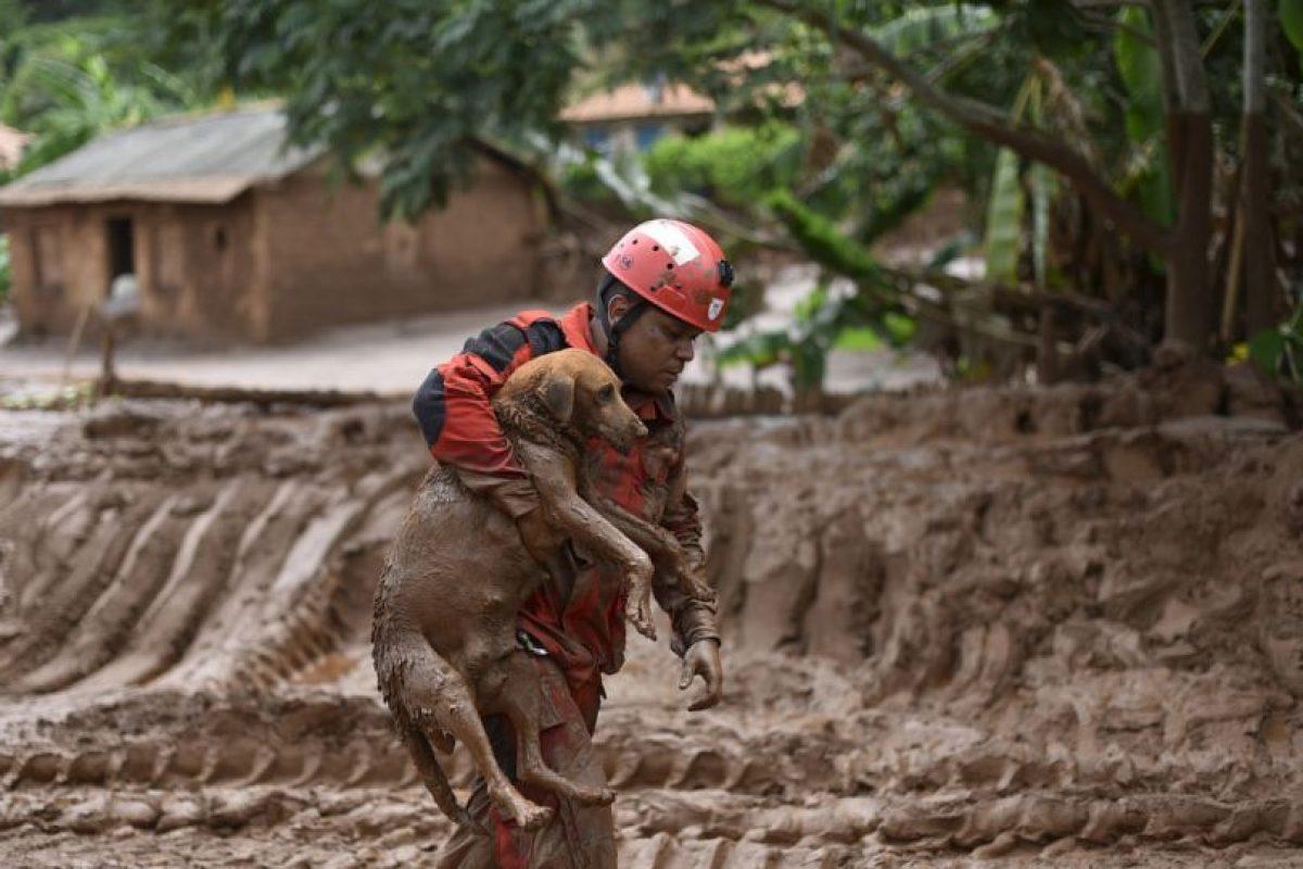 Rescatista salva a perra del derrumbe de lodo en Brasil. Foto:AFP. Imagen Por: