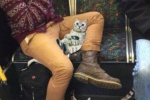 El cual se burlaba de esta forma de sentarse de los hombres, colocando con Photoshop gatos entre sus piernas.. Imagen Por: