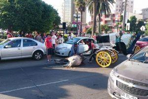 La imagen que muestra el momento en que el caballo sufrió el accidente. Foto:Reproducción / Facebook Mauricio Aplablaza. Imagen Por: