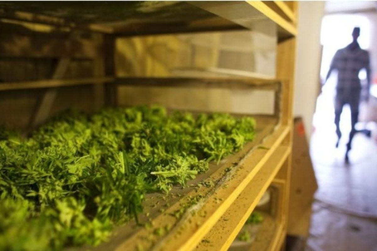 Según la Coalición Contra el Abuso de Drogas, el precio promedio por un gramo de marihuana es de nueve dólares con 18 centavos. Foto:Getty Images. Imagen Por: