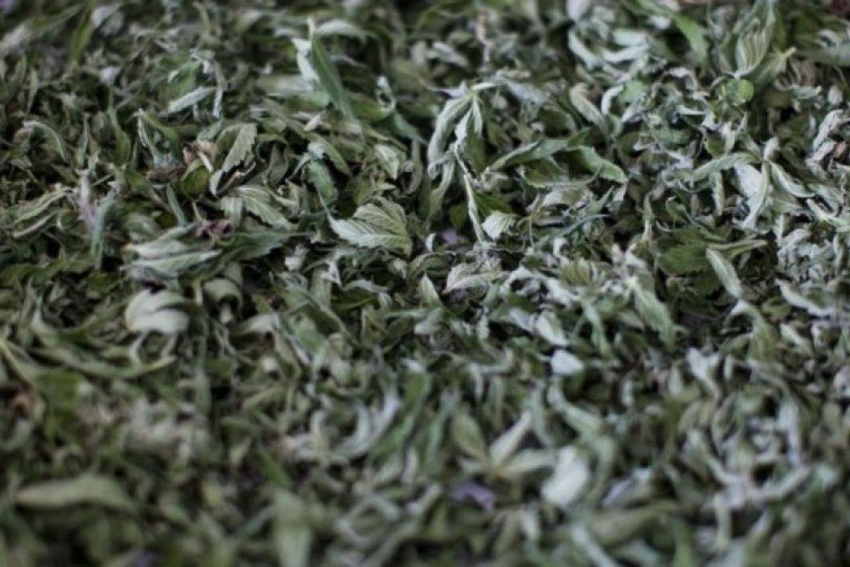 Países en los que la marihuana está más barata Foto:Getty Images. Imagen Por: