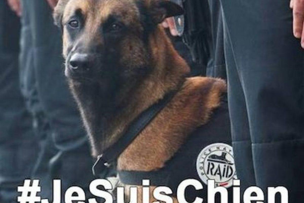 """#JeSuisChien (Yo soy perro), los tributos a """"Diesel""""; perra policía que murió este día Foto: Instagram.com/kuatrech. Imagen Por:"""
