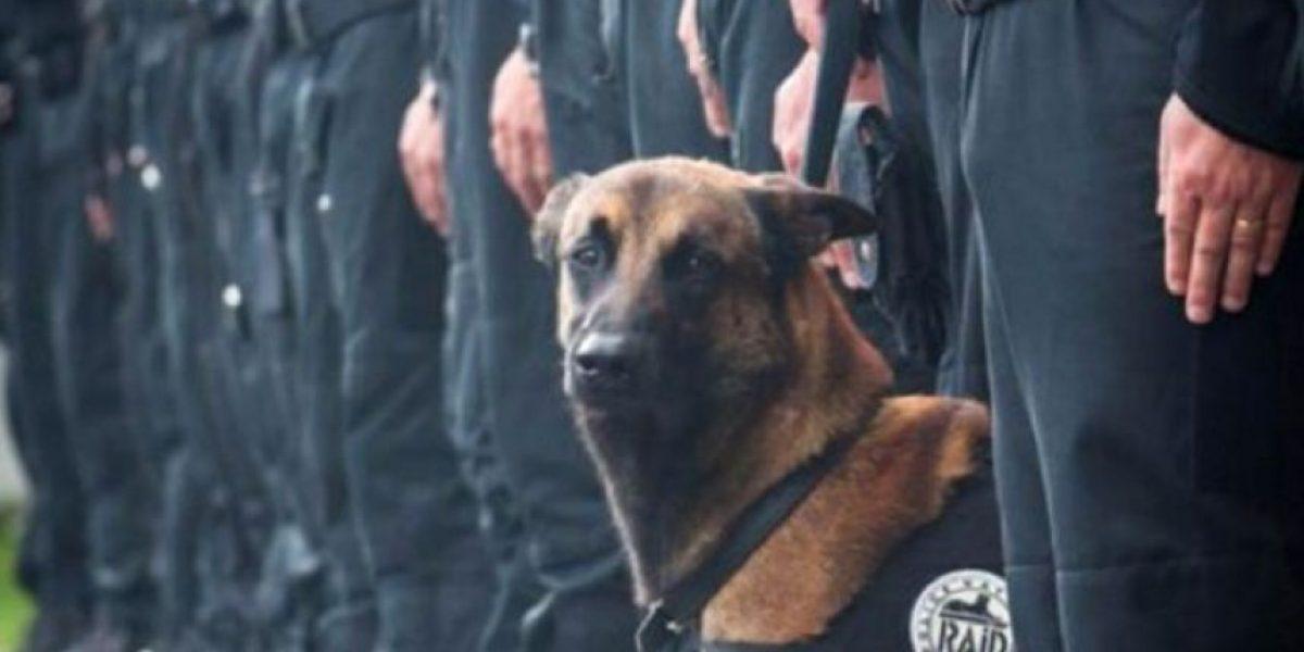 Muerte de perro policial en redada antiterrorista en París remece a las redes