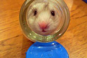 Foto:Reproducción / dailymail.co.uk – CEN. Imagen Por: