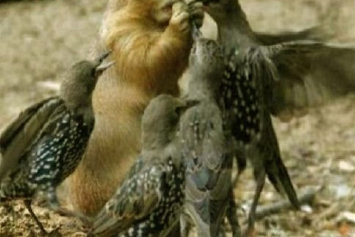 Las marmotas son animales muy sociables que usan una gran variedad de sonidos para comunicarse entre ellas, sobre todo cuando tratan de advertirse de un peligro. Foto:Tumblr. Imagen Por:
