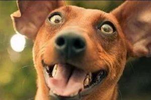 Estos perros fueron captados en momentos muy particulares Foto:Vía Youtube. Imagen Por:
