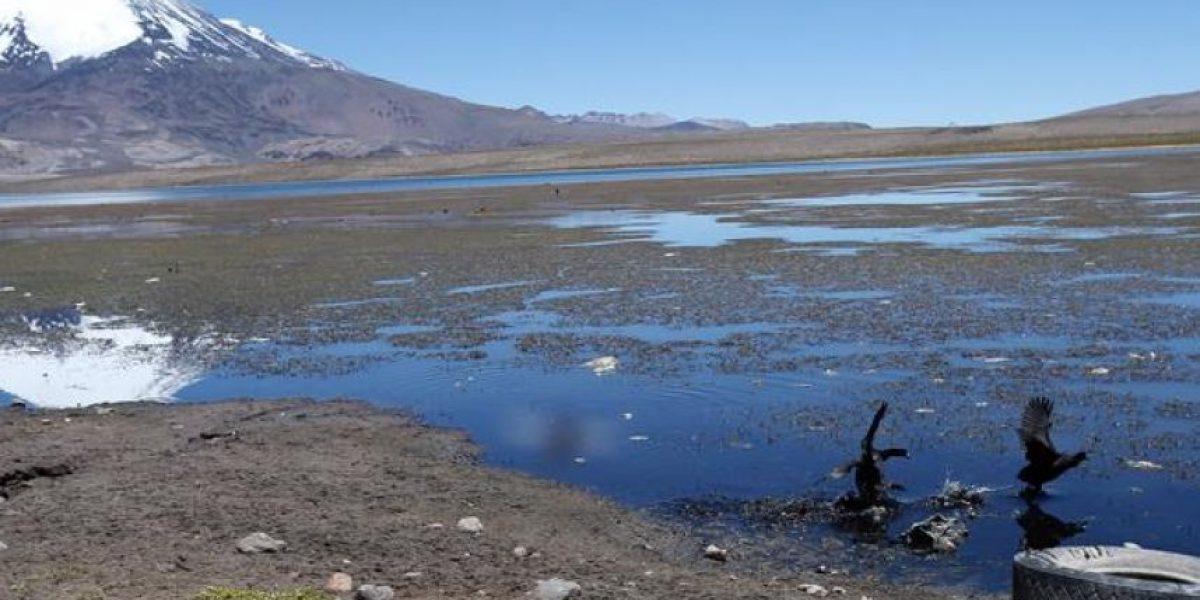 Lago Chungará: un paraíso en las alturas convertido en vertedero