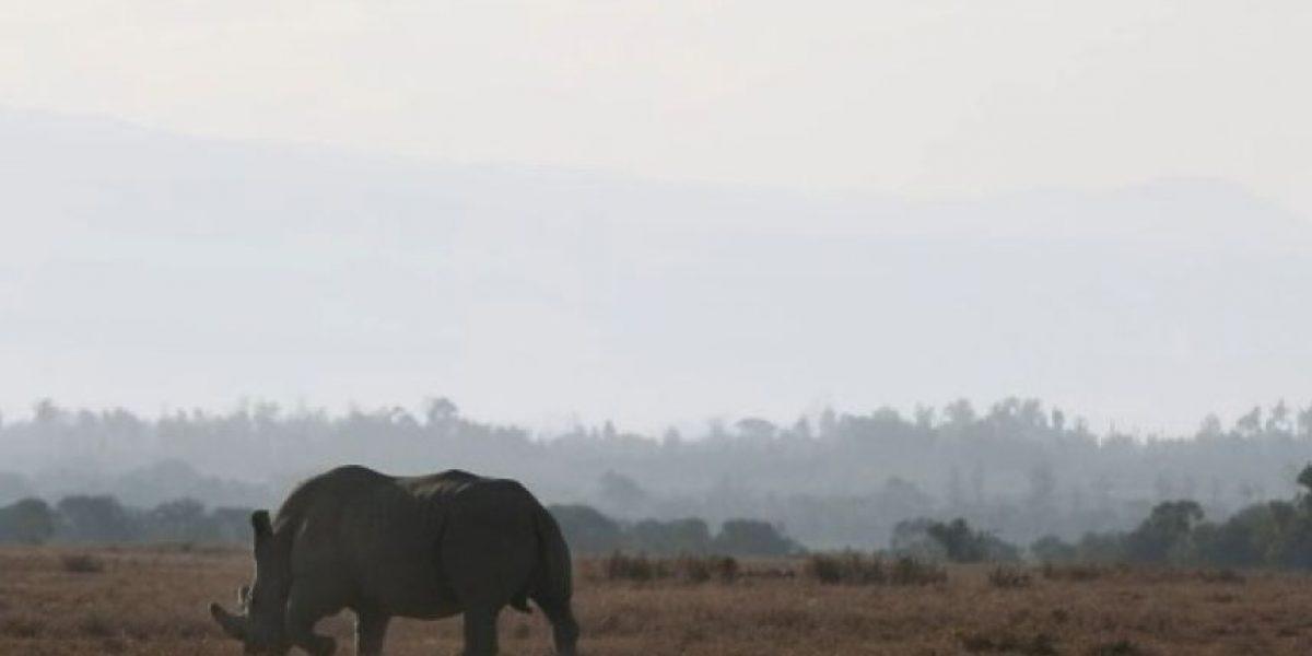 Muere el último rinoceronte blanco que vivía fuera de África