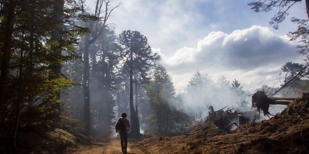 Con presupuesto 46% superior la CONAF combatirá incendios forestales