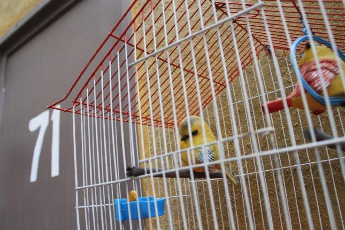 """Las aves de """"la bruja del 71"""" afuera de su departamento. Foto:Nicolás Corte. Imagen Por:"""