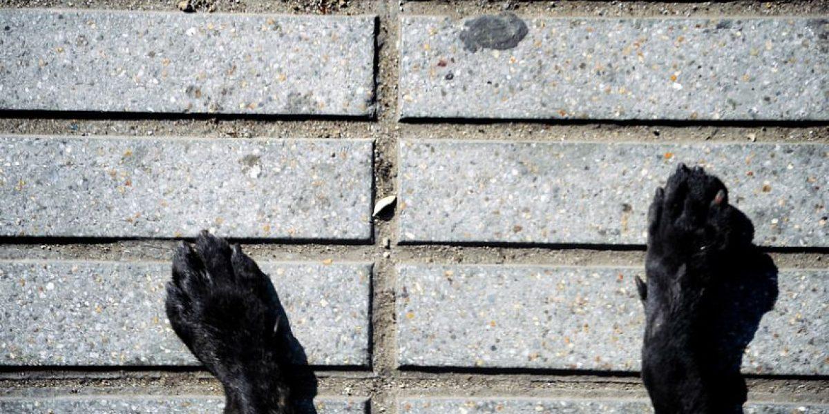 Valparaíso: hallan 30 colas de perros y no descartan su uso en carnicería