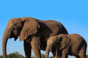 Elefantes, también del Zoológico Woodland Park Foto:Vía Instagram.com/woodlandparkzoo. Imagen Por: