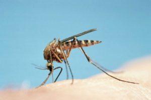 Los productos fueron probados utilizando una mano humana como atrayente en una configuración olfatómetro y un tubo con Aedes aegypti y Aedes albopictus, los dos principales insectos que contagian enfermedades a los humanos Foto:Getty Images. Imagen Por:
