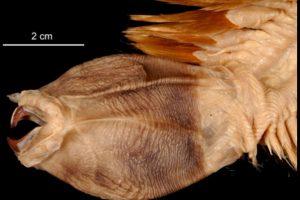 Viven en los océanos profundos de ese continente. Foto:vía RealMounstrosities. Imagen Por: