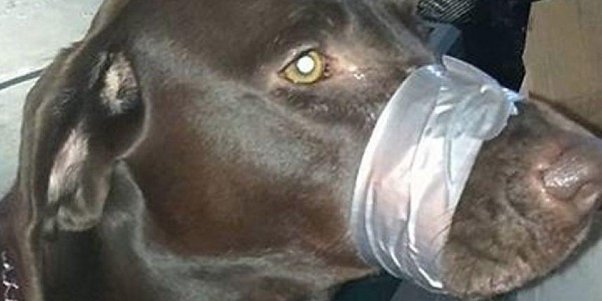 Policía investiga a mujer que publicó en Facebook foto de un perro amordazado