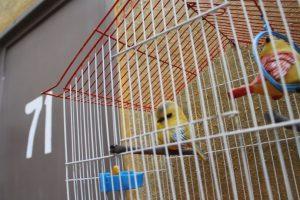 """Las aves de la """"Bruja del 71"""". Foto:Nicolás Corte. Imagen Por:"""