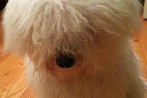 Siempre ha lucido adorable. Foto:facebook.com/beast.the.dog. Imagen Por: