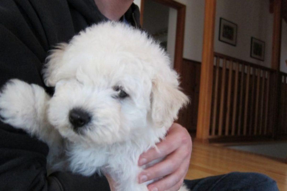 En 2001 era un pequeñito. Foto:facebook.com/beast.the.dog. Imagen Por: