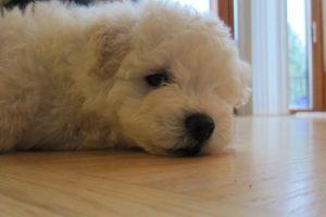 De esta forma se veía hace cuatro años. Foto:facebook.com/beast.the.dog. Imagen Por: