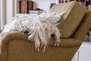 Su cabello es enorme. Foto:facebook.com/beast.the.dog. Imagen Por: