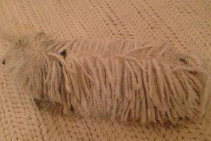 Se confunde con la alfombra. Foto:facebook.com/beast.the.dog. Imagen Por: