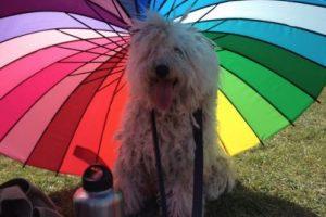 En sus ratos libres está al aire libre cubierto del sol. Foto:facebook.com/beast.the.dog. Imagen Por: