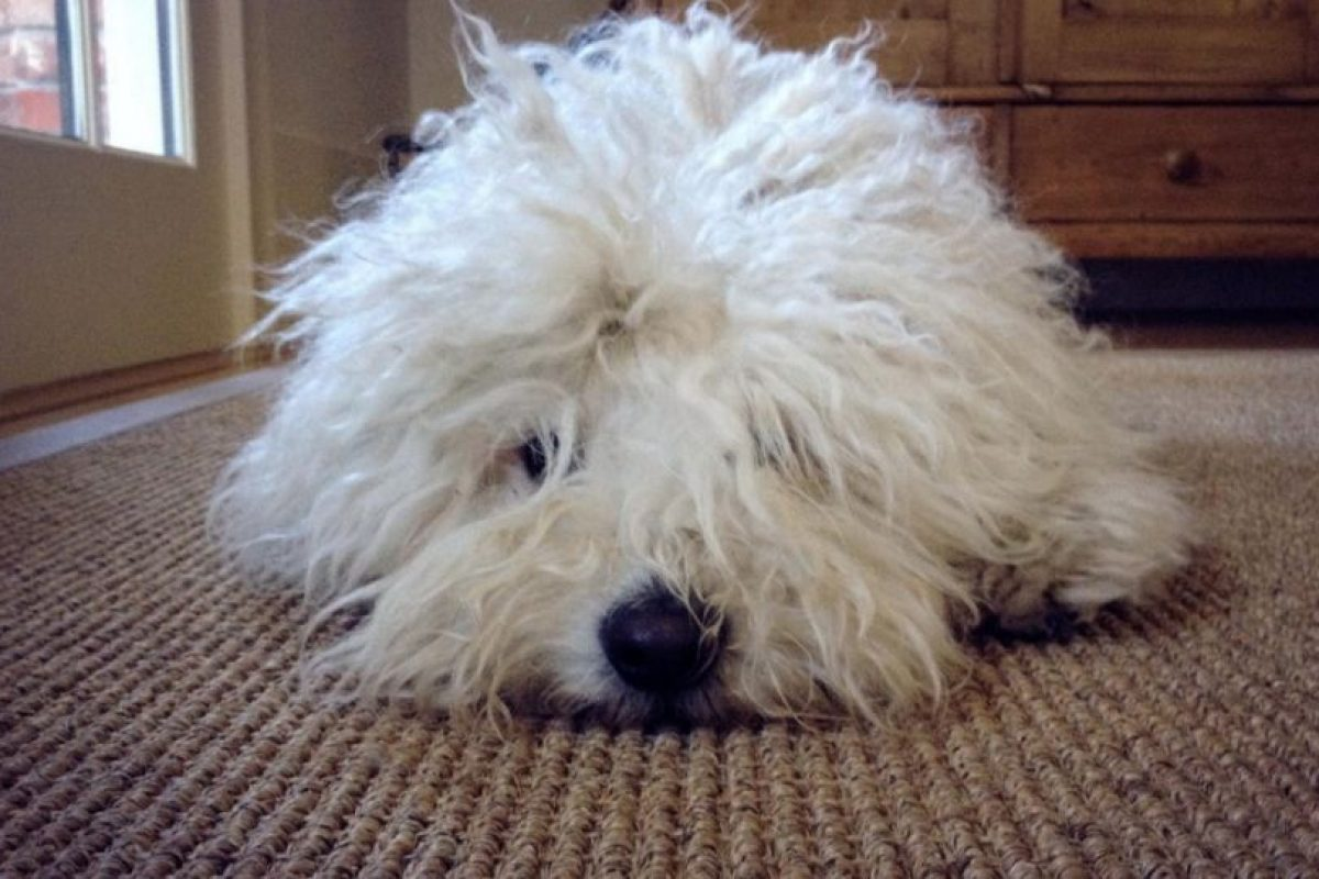 Con cara de sueño. Foto:facebook.com/beast.the.dog. Imagen Por: