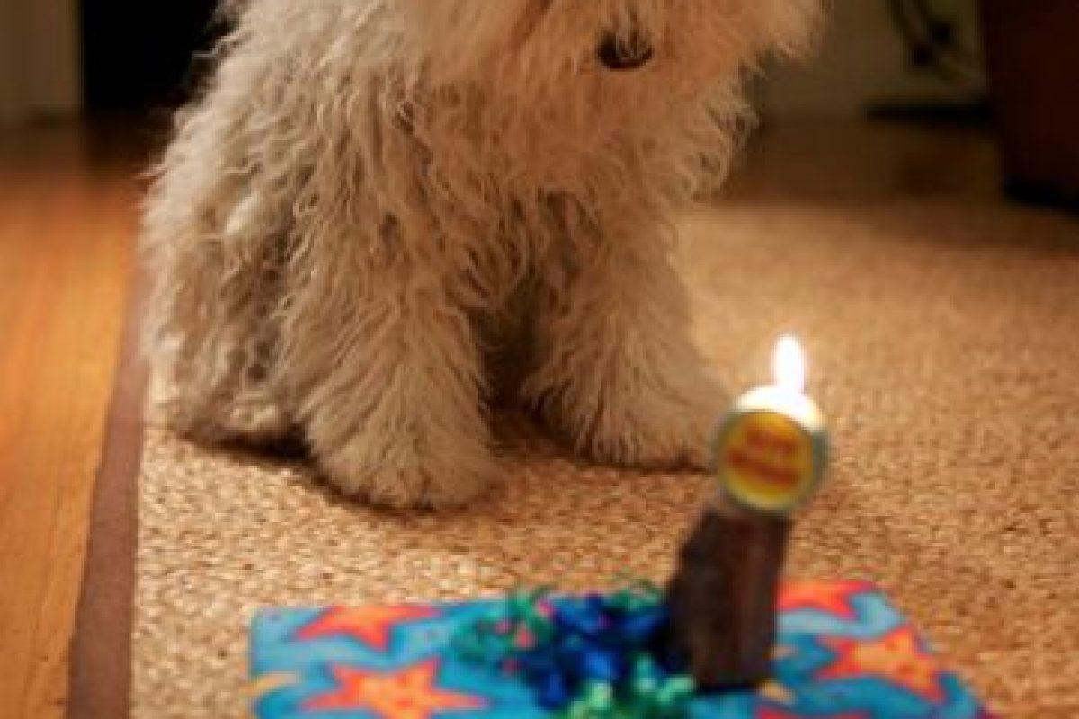 En uno de sus cumpleaños. Foto:facebook.com/beast.the.dog. Imagen Por: